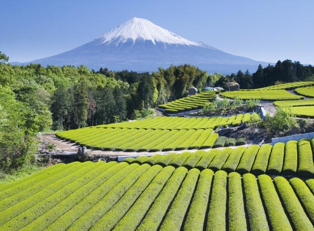 Blick auf den Fuji Jama